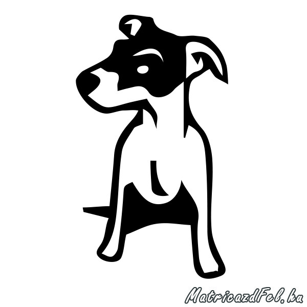 jack-russel-terrier-matrica21