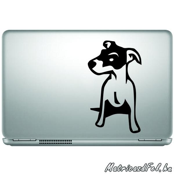 jack-russel-terrier-matrica23
