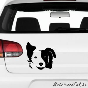 Border collie matrica 4