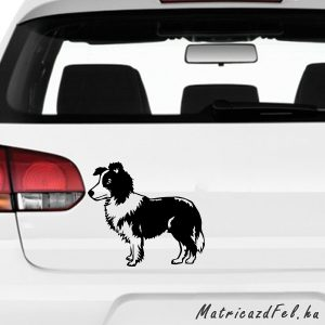 Border collie matrica