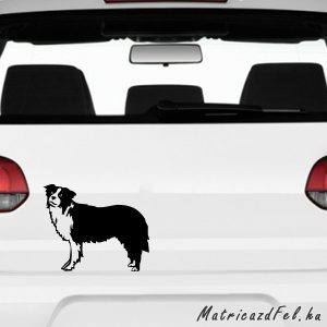 Border collie matrica 2