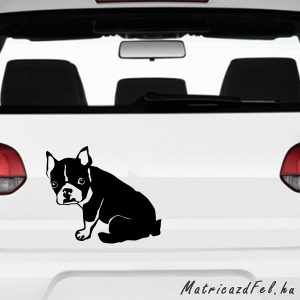boston terrier matrica 5