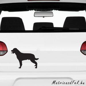 Rottweiler matrica 15